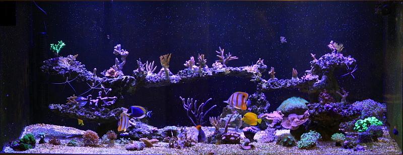 Aqua-Crashf.sized.jpg